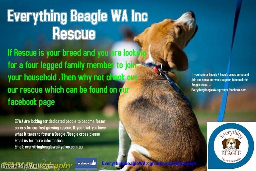 Foster carers needed in WA... Dogs up for adoption