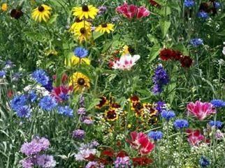 BUTTERFLY GARDEN MIX attract BUTTERFLIES wild flower garden plant seed 250 seeds
