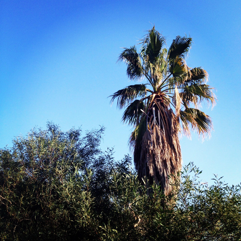 palm tree at the olive garden alicante spain wwwtheolivegardenes - Olive Garden Palm Desert