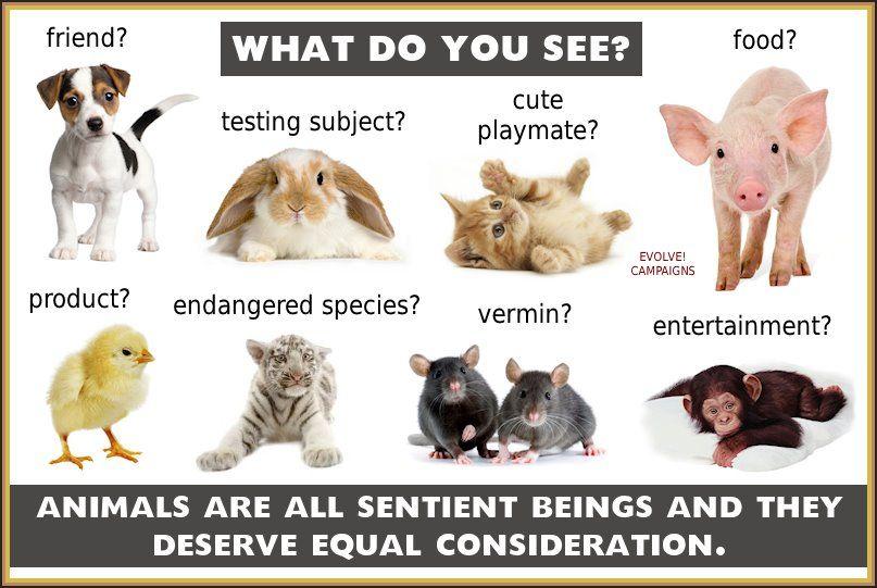 do animals deserve rights essay - Documents Do Animals Really ...