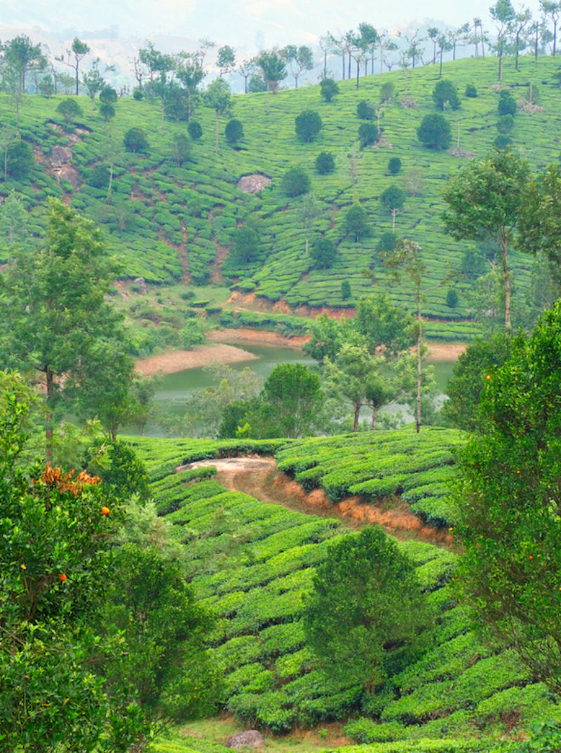 Adventure Of A Different Kind In Kerala Southern India With