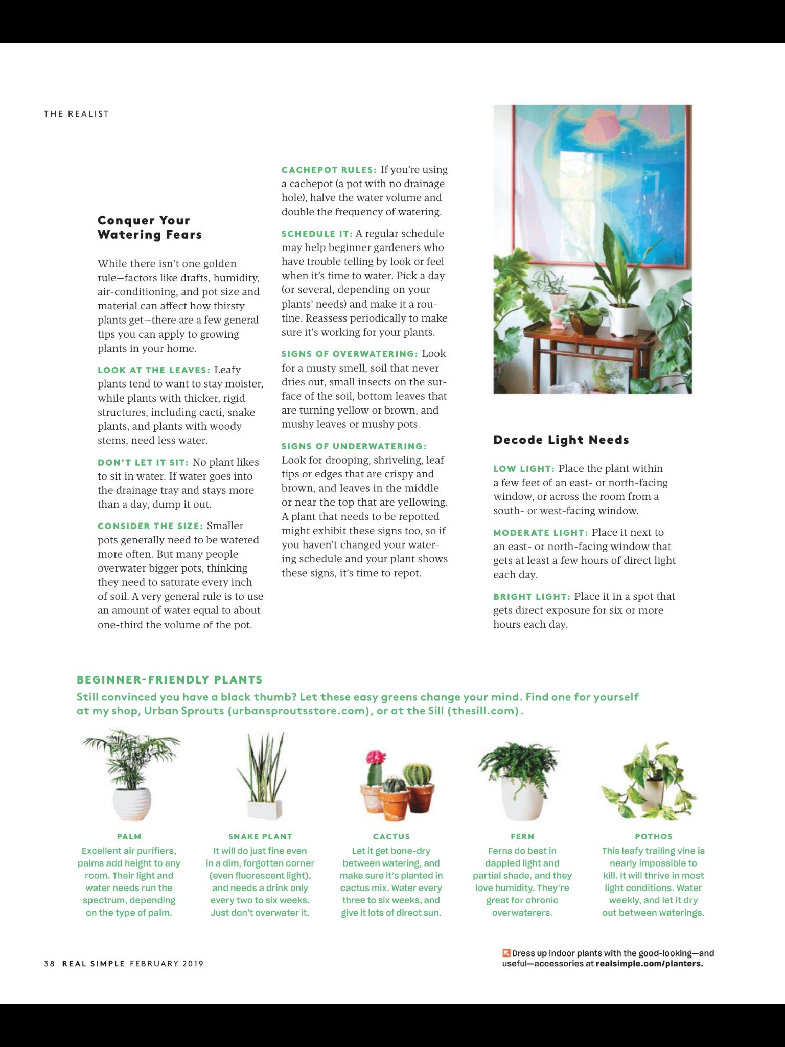 How Not To Kill Your Indoor Plants A Guide From Real Simple