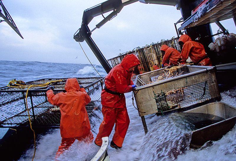 Alaskan King Crab Fisherman Professional Aquatic Careers Alaska Fishing Dangerous Jobs Crab Fishing