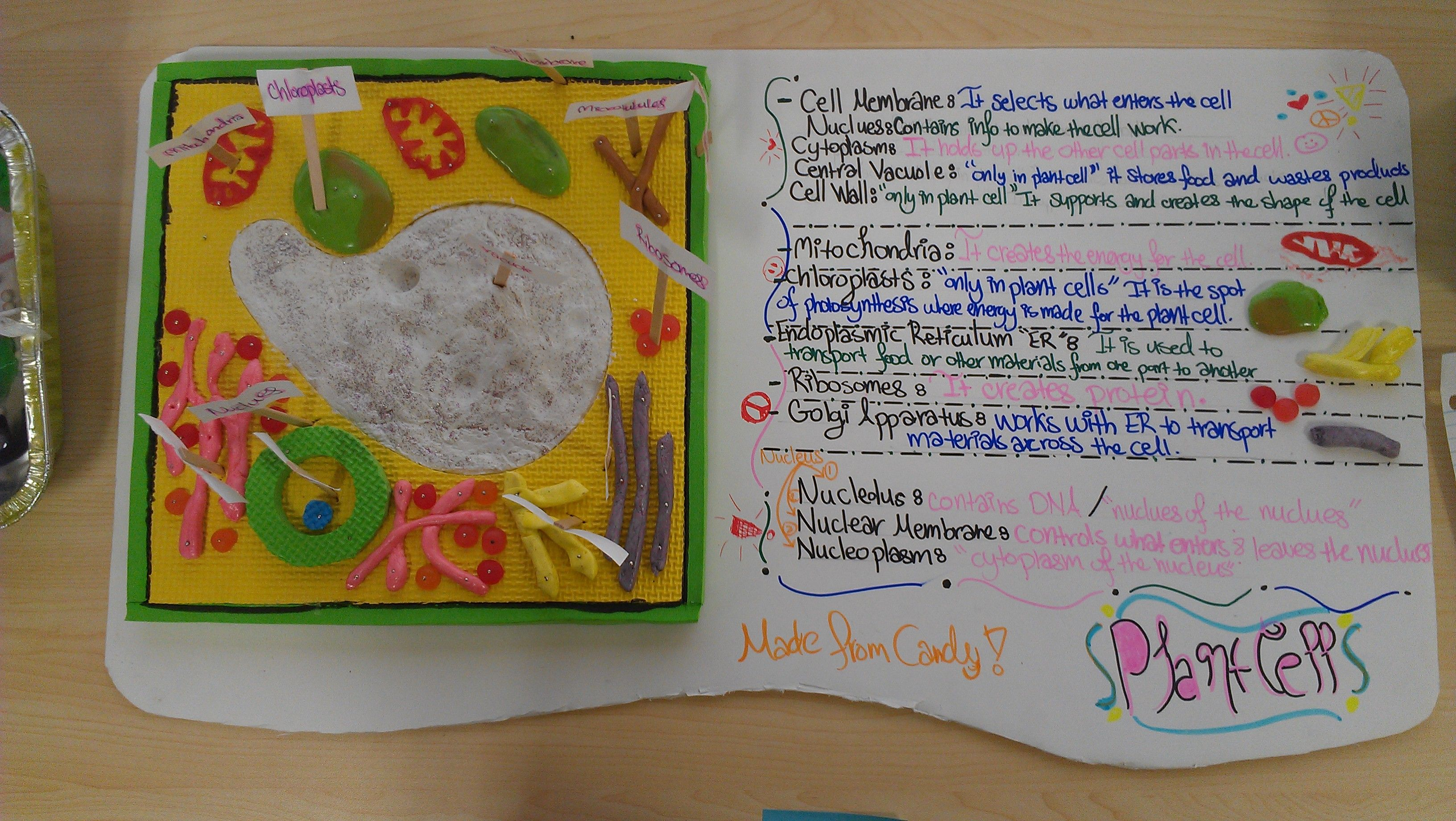 7th Grade Plant Cell Model By Noor Naji