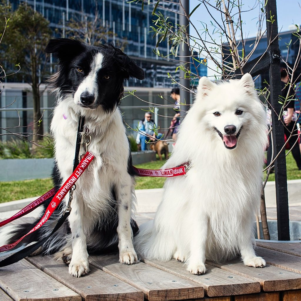 Interview With Dr Chris Brown The Bondi Vet Puppy Tales Dogs Day Out Japanese Spitz Puppies