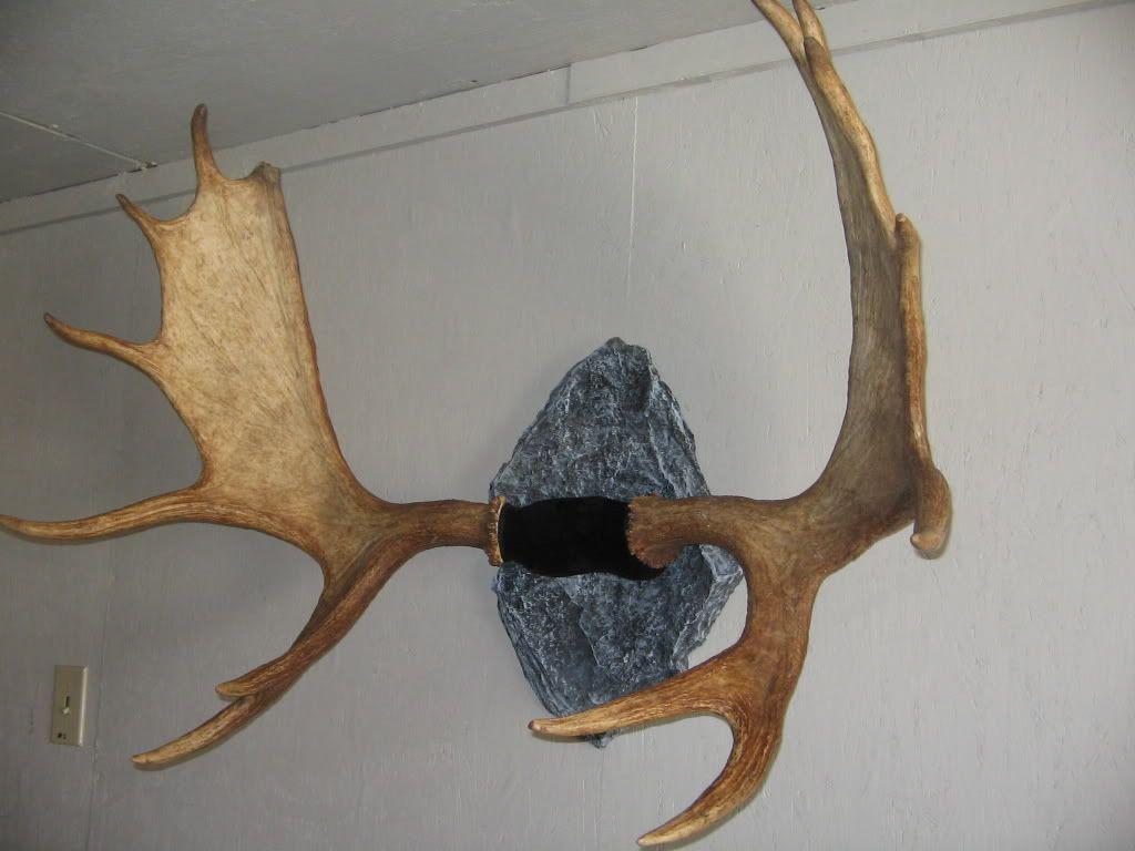 Deer antler mounting kit instructions - Antler Mount Stone