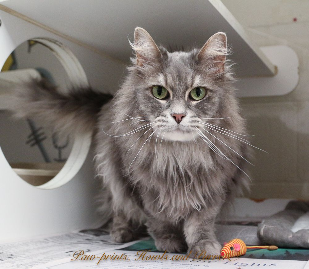 14++ Anchorage animal care and control images
