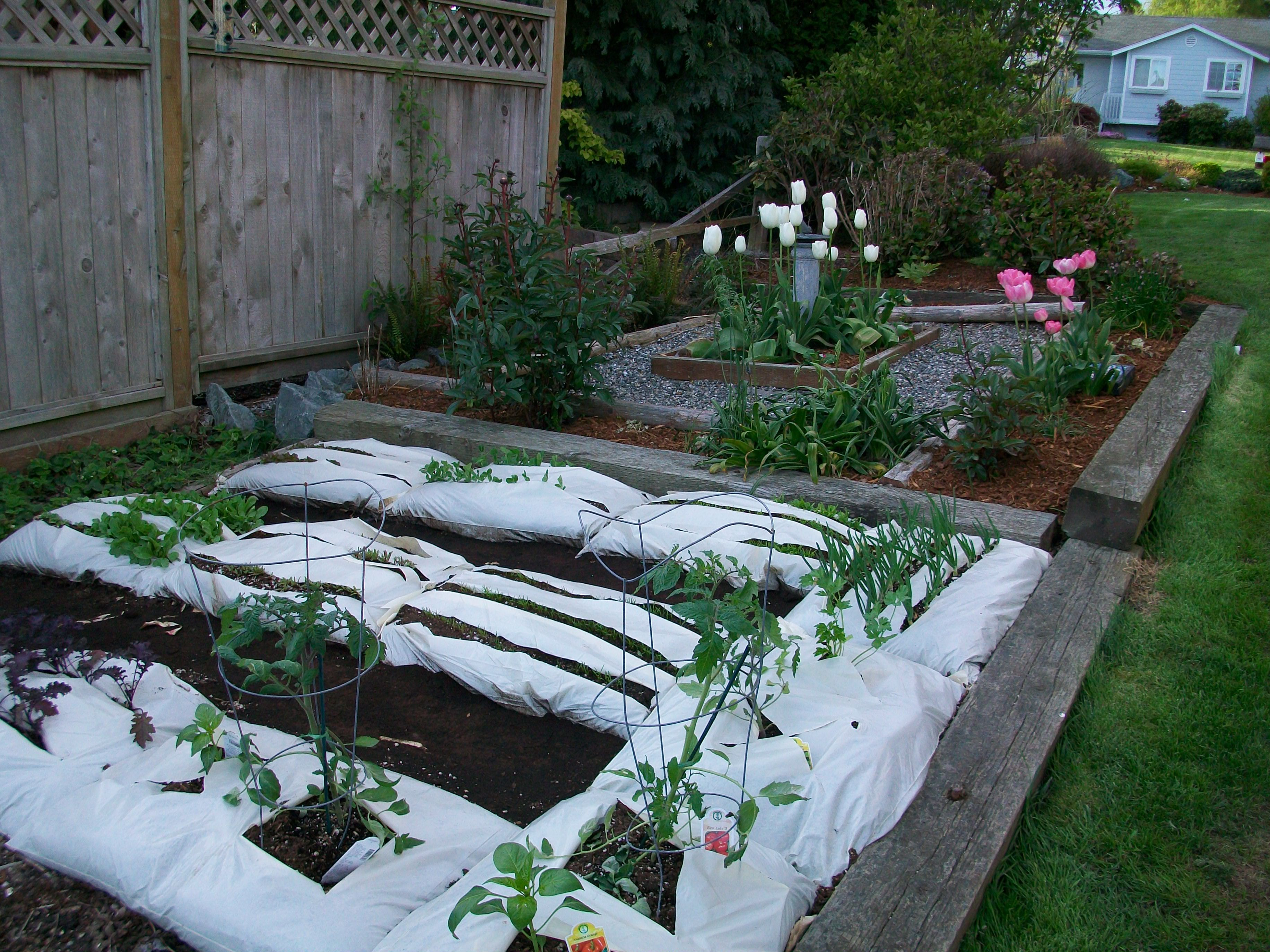 Garden in a bag when I was tired of fighting bad soil