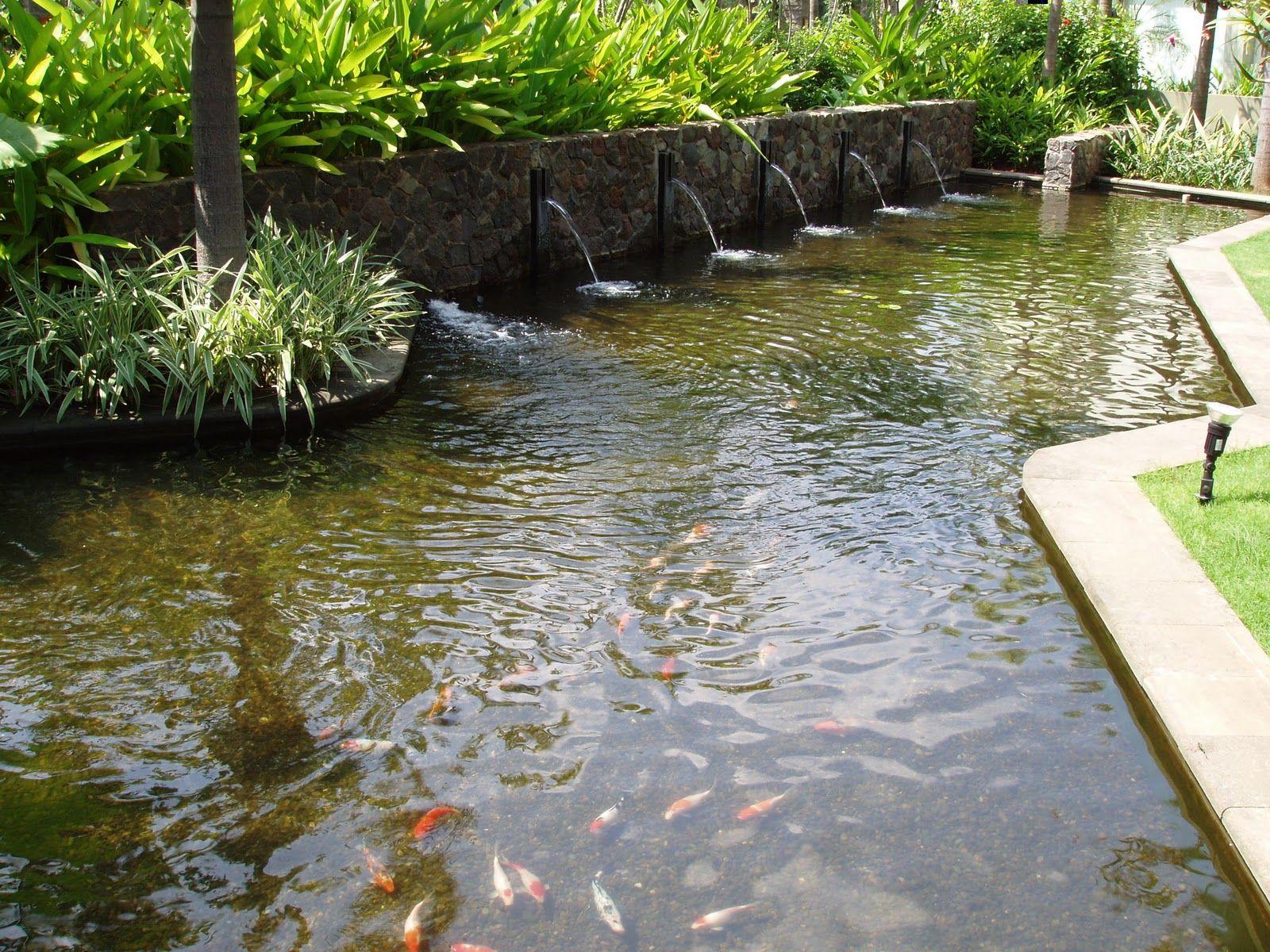 Elegant Backyard Pond Fish And Cute Fish Also Natural ...