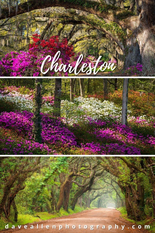 bef58cc1191956fd203132b2eee94af6 - Magnolia Plantation And Gardens Savannah Ga