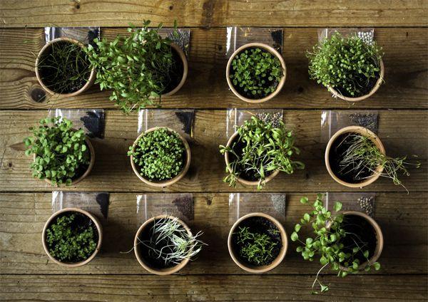 Herbal Almanac on Behance Objetc Design Pinterest Behance