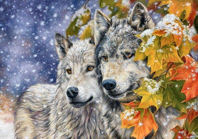 Волчья пара в заснеженном лесу, картины раскраски по ...