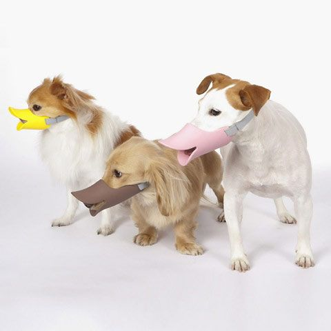 Muzzle Gives Your Dog Instant Duckface Dog Muzzle Pet Gear