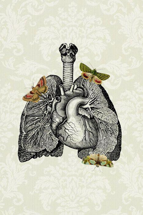corazon-pulmon | retratos anatomicos | Pinterest | Anatomía ...