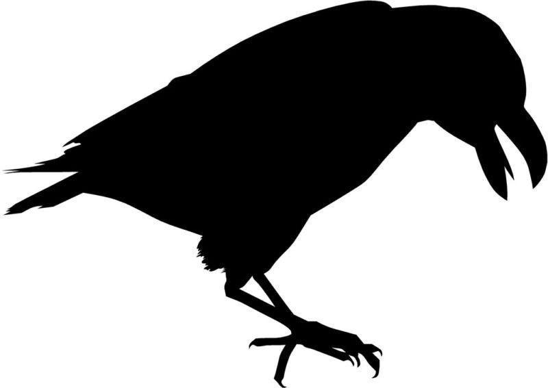 Crow Raven Blackbird Die-Cut Decal Car Window Wall Bumper Phone Laptop  sc 1 st  Pinterest & Crow Raven Blackbird Die-Cut Decal Car Window Wall Bumper Phone ...