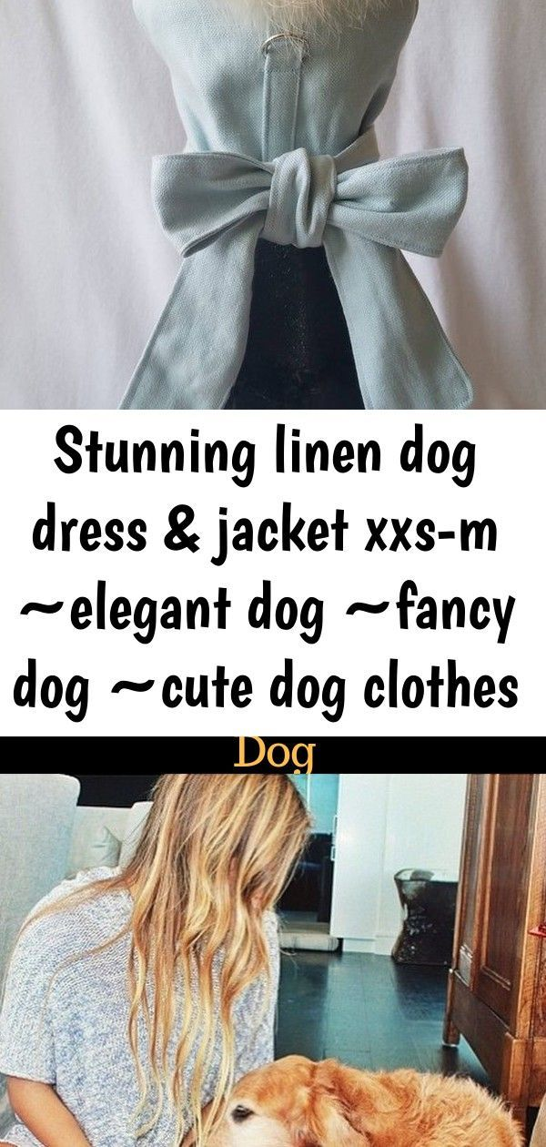 Stunning linen dog dress & jacket xxs-m ~elegant dog ~fancy dog ~cute dog clothes ~pet outfit ~sma 9 #bedfalls62 Stunning Linen Dog Dress & Jacket XXS-M Elegant dog Fancy image 2 5 Amazing Things You (Probably) Didn't Know About Your Dog. According to the Nova documentary, dogs decoded there are more pet dogs than babies in the world, nearly half a billion! so let's find out about pooches and why we love them so does your dog really love you? Yellow & White Flower Lace Dog Harness Dress #dogclot #bedfalls62