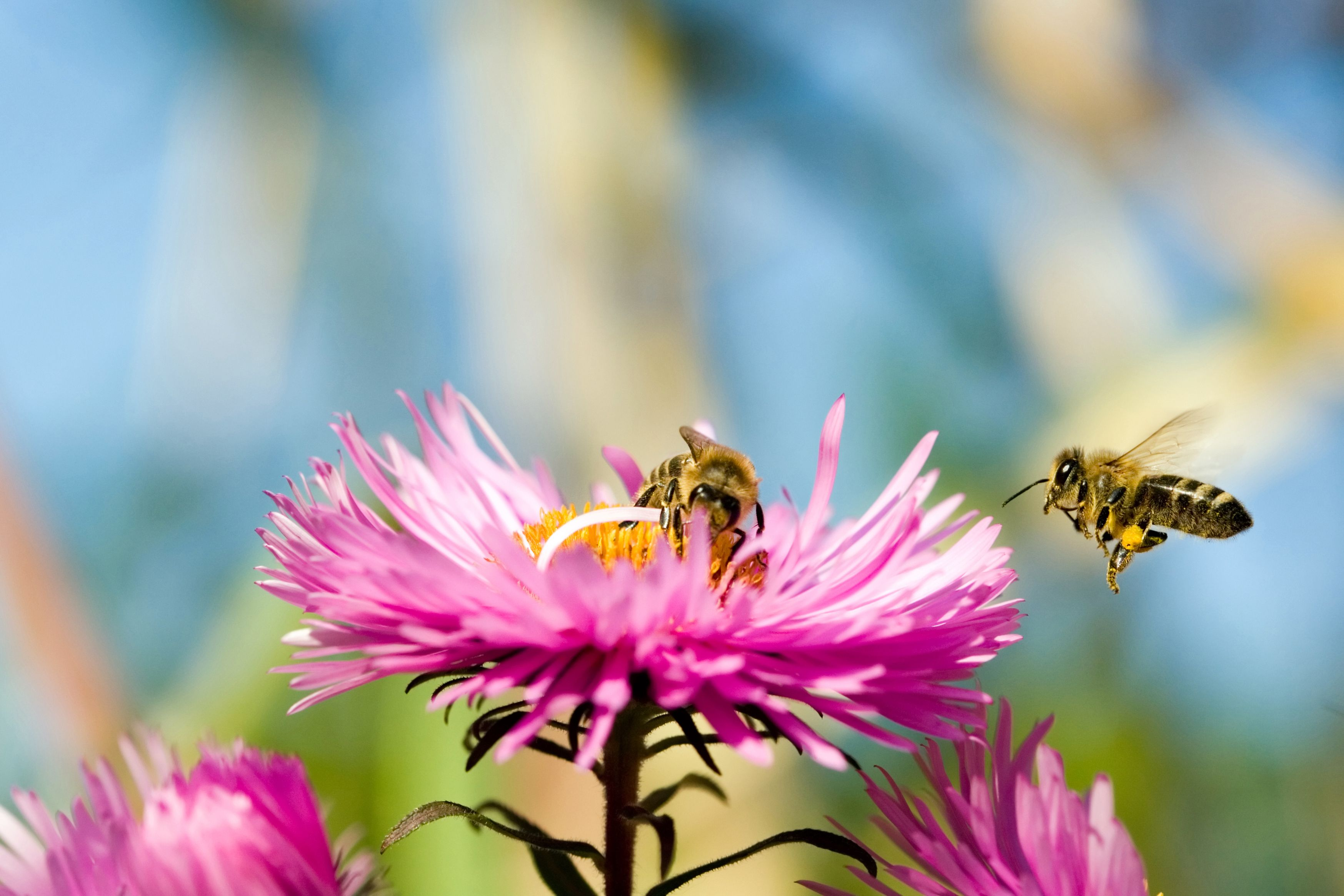 Dependence Of Human Beings On Bees Bee Friendly Plants Bee Bee Friendly