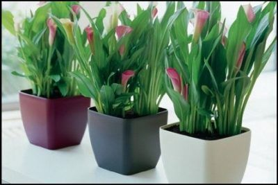 Nombres de plantas para jardines exteriores resistentes al for Plantas decorativas resistentes