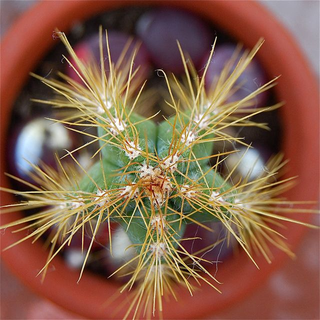 cactus (con imágenes) | Te encontré