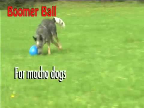 Best Outdoor Dog Toys For Dogs Alone Outside Outdoor Dog Toys