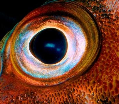 5 Most Advanced Marine Animal Eyes | Giant squid and Animal