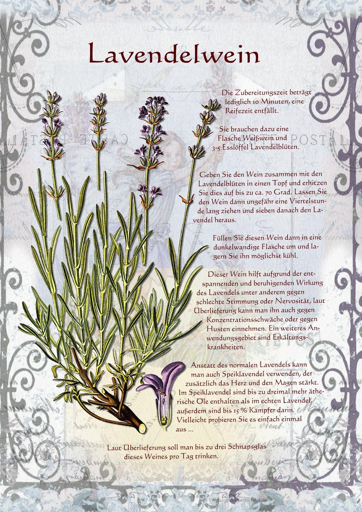 Ein Lavendelwein | Hausgemacht | Pinterest | Herbs, Plants and ...