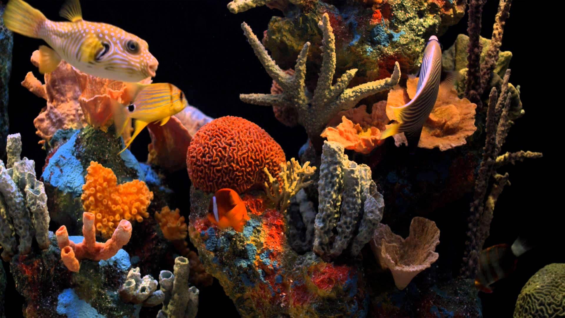 Akvaryum Aquarium Fish Tank 1080p Full HD Maple