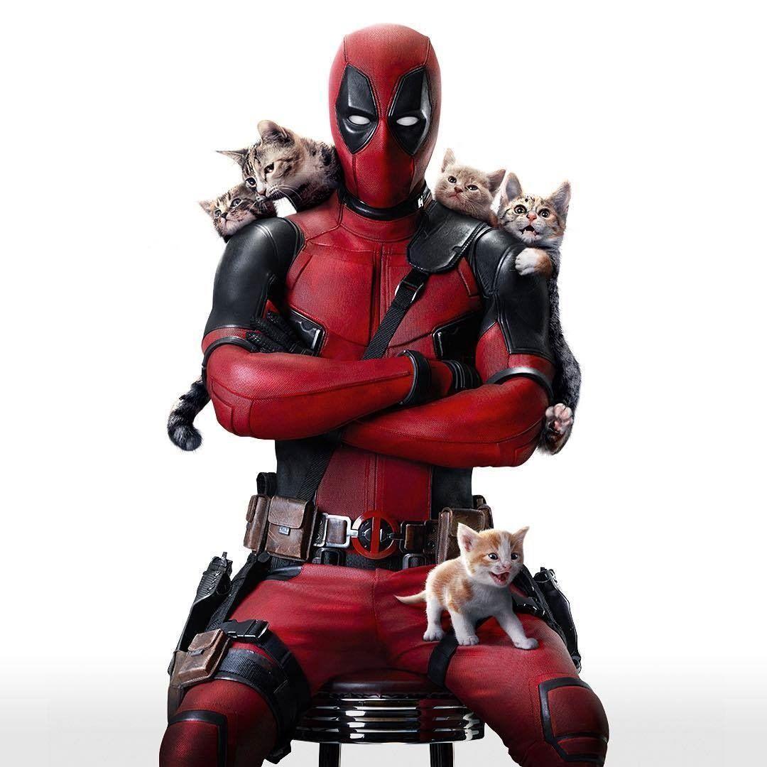 Deadpool Kittens スーパーヒーロー デッドプール マーベル