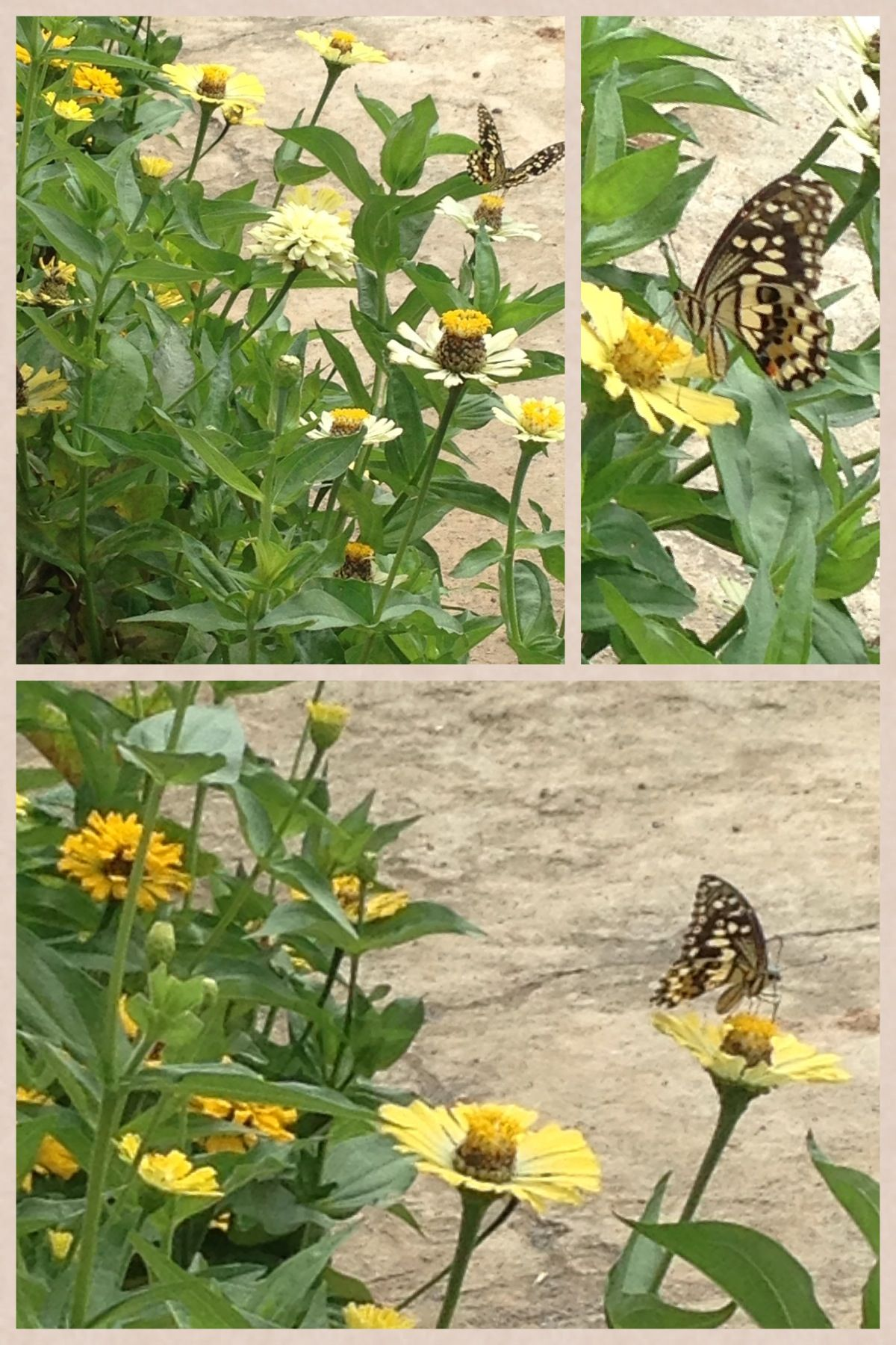 Butterfly kisses our garden