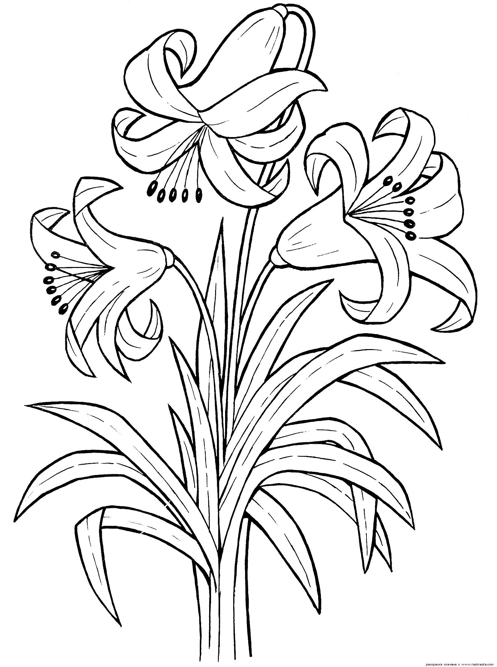 Raskraski Cvetov Rastenij Prirody Dlya Detej Raspechatat Stranica 6 Printable Flower Coloring Pages Flower Coloring Pages Flower Printable