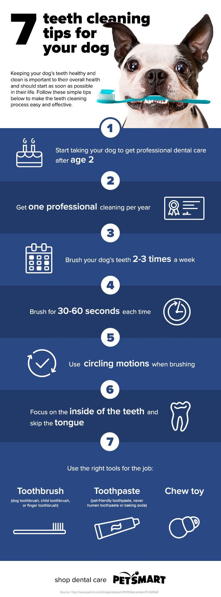 Doggie Dental Care: Check out our 7 tips for keeping your dog's teeth clean and…