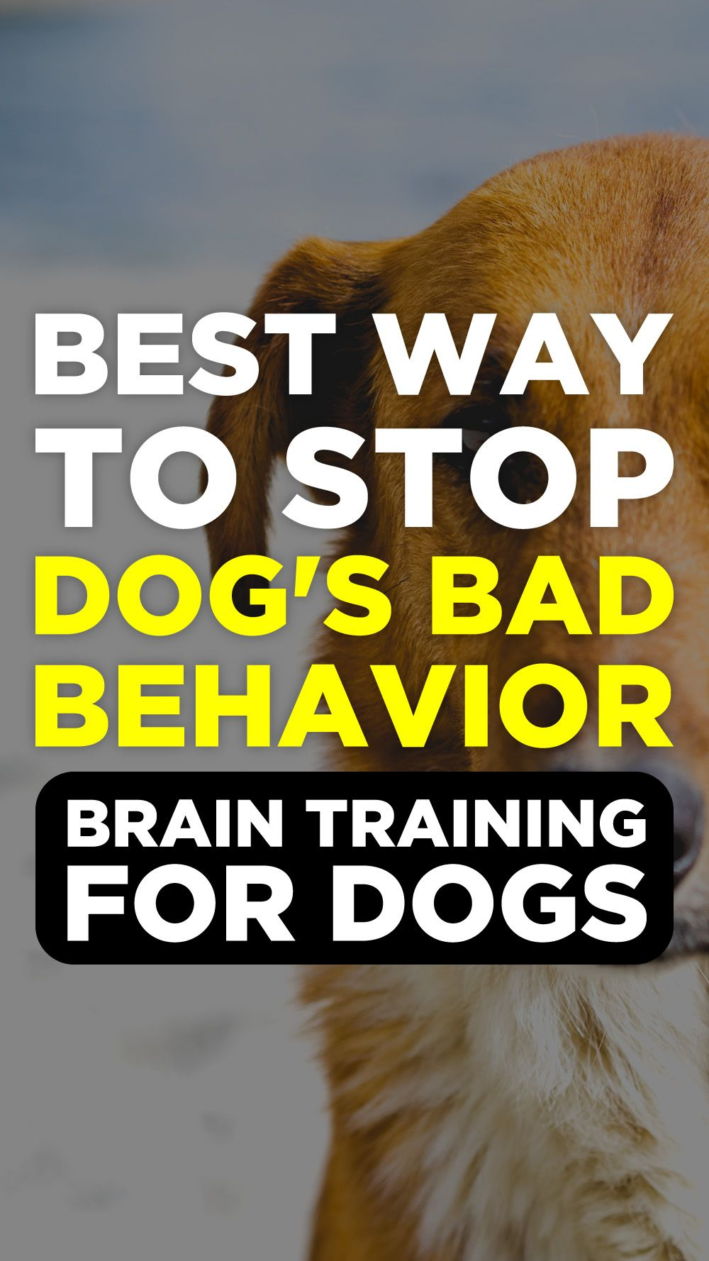 Brain training for dogs review emotional support dog