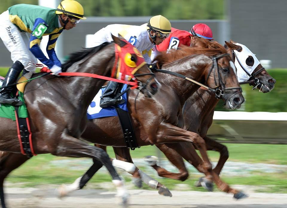 Miami Horse Racing Tracks