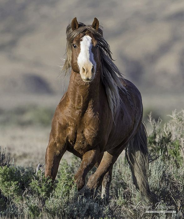 American Wild Horse Preservation Campaign - Make your voice heard!  Deadline March 24, 2014