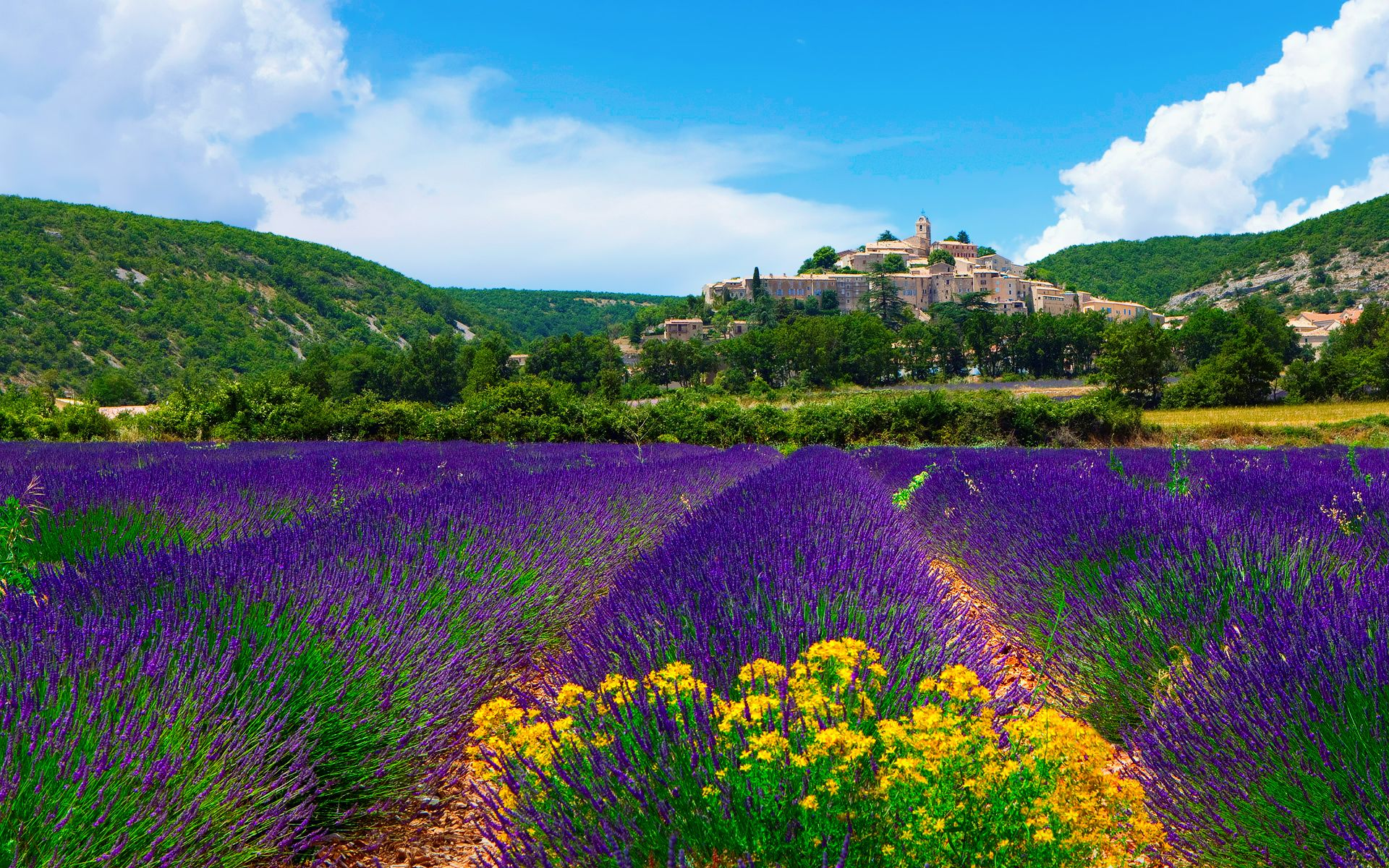 Field Lavender Purple Flowers France Country Castle Kingdom Jpg 1920 1200 Божье творение Pinterest Provence Fields And