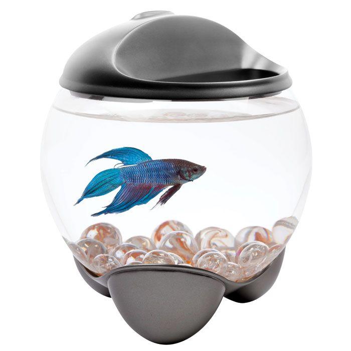 Tetra betta bubble betta bowl 5 gal betta for Bubbles in betta fish tank