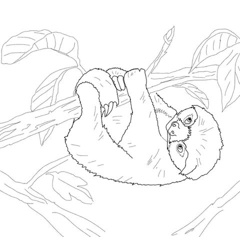 Baby Sloth Coloring Page Mit Bildern Ausmalbilder