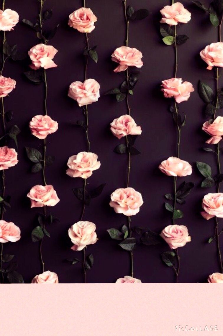 Floral iphone wallpaper with pink roses Drawing ideas Pinterest