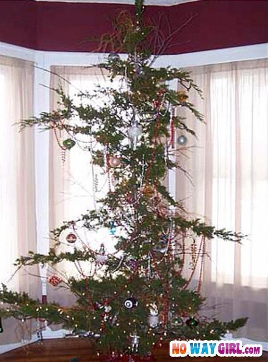 the christmas tree struggle nowaygirl - Cheap Christmas Trees Near Me