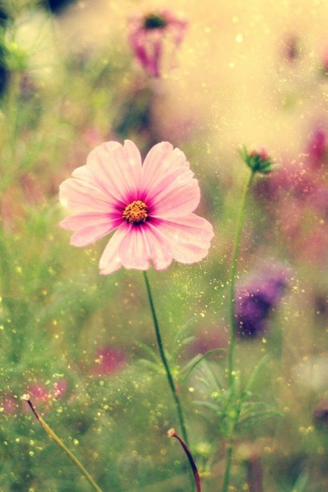 Beautiful Spring Morning Flower With Images Beautiful Wallpapers For Iphone Flowers Beautiful Wallpapers