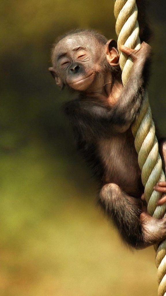 Baby Monkey IPhone Wallpaper