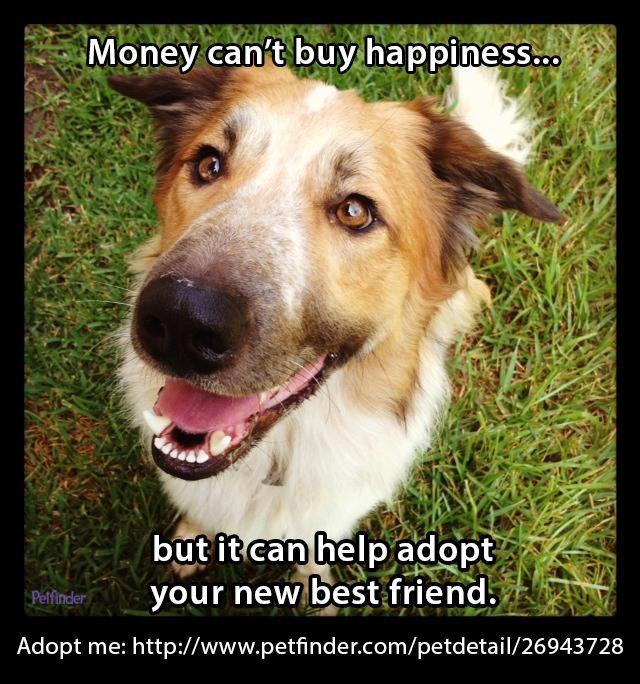 Adopt Mason On Pets Dogs Animals