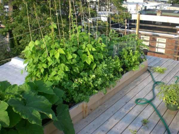 Guida completa all\'orto in casa per la coltivazione di ortaggi e ...
