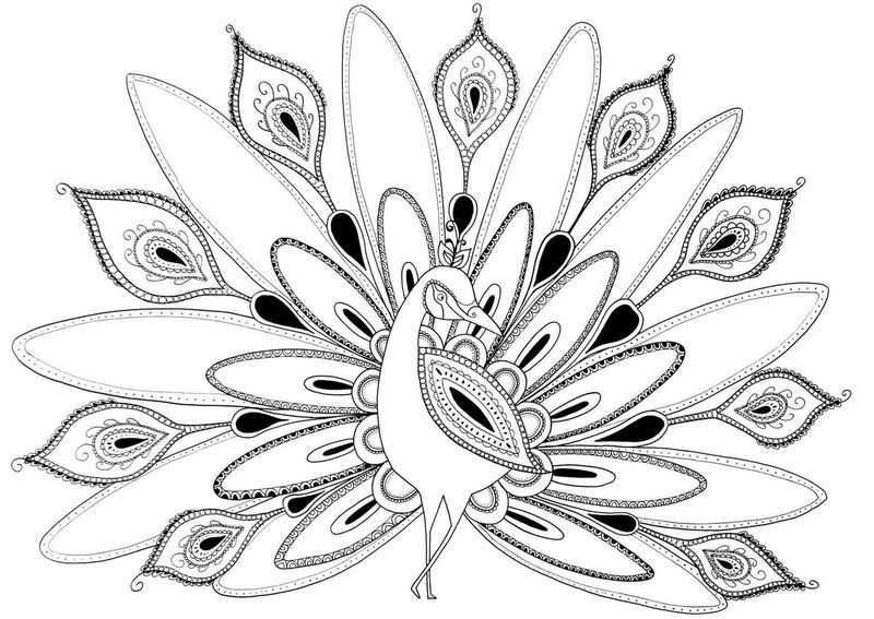 Awesome Peacock Coloring Pages Ideas Bird Coloring Pages