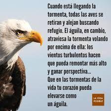 Resultado De Imagen De Vuela Aguila Frases Frases Cortas