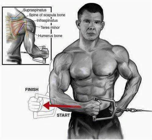 Hombro Con Una Sola Polea Bodybuilding Workouts Workout Chart Gym Guys