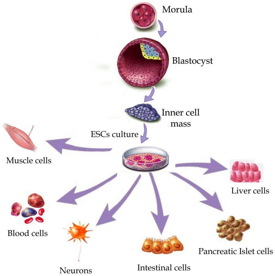 Edexcel As Level Biology Coursework Help -