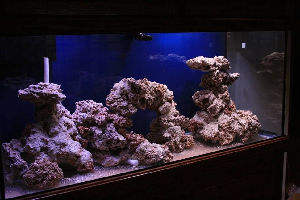 Pictures of just your liverock aquascaping...for a SPS ...