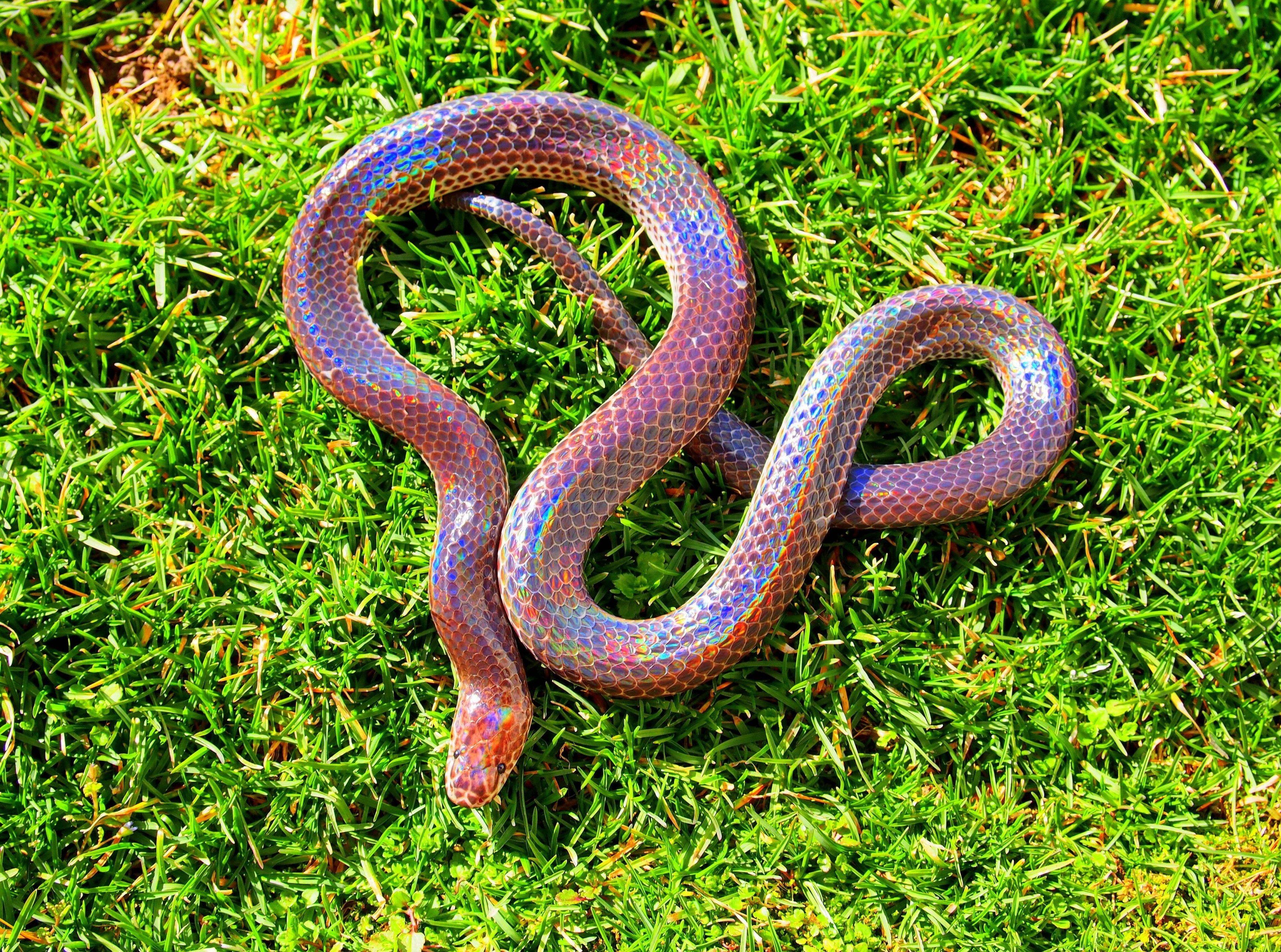 3840x2855 sunbeam snake 4k wallpaper download hd Pretty