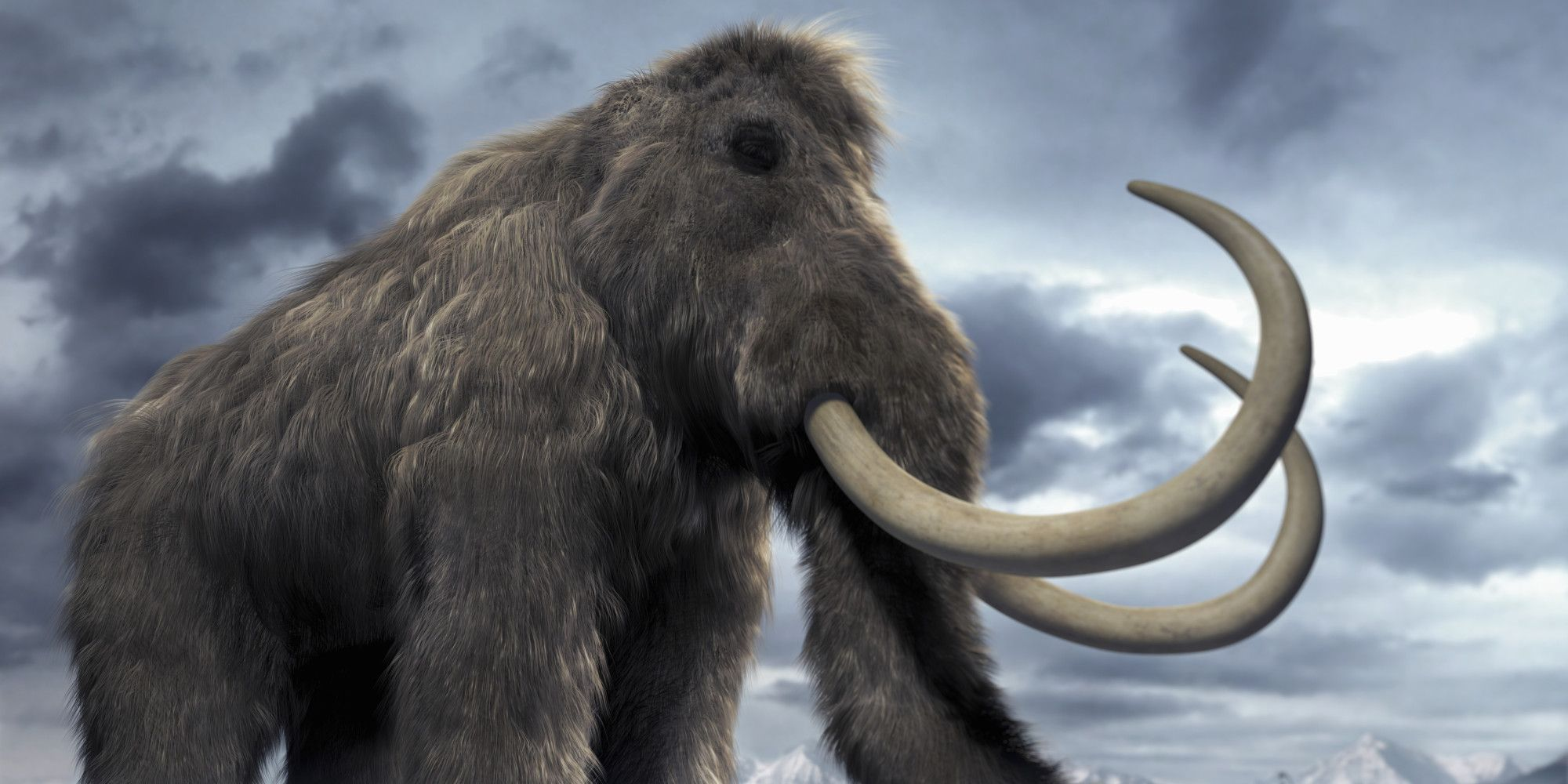Back Woolly Mammoth? Wooly mammoth, Mammoth